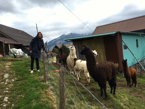 me and the llamas,  Buelen, Switzerland - filter